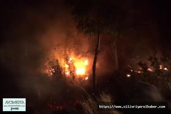 Silivri'de ağaçlık alanda yangın çıktı