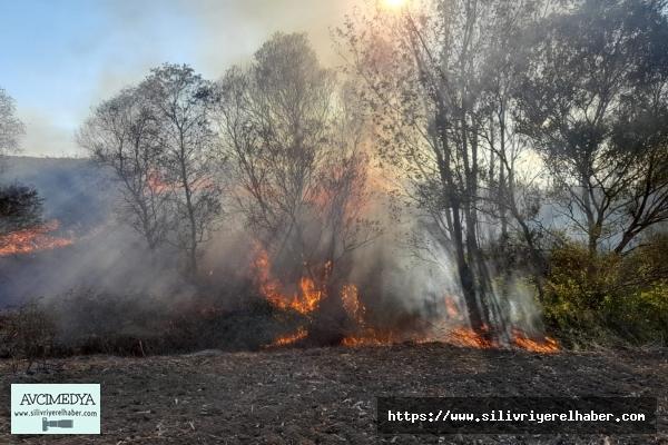 Silivri'de Ağaçlık ve Otluk Alanda Yangın