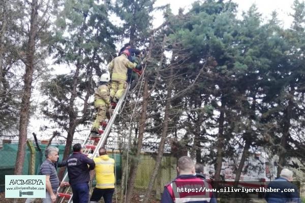 Budamak için çıktığı ağaçta elektrik akımına kapıldı