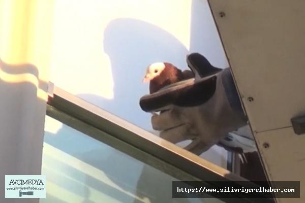 Pencerede sıkışan güvercini itfaiye kurtardı