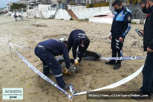 Silivri'de 90 Kiloluk Ölü Caretta Caretta Bulundu