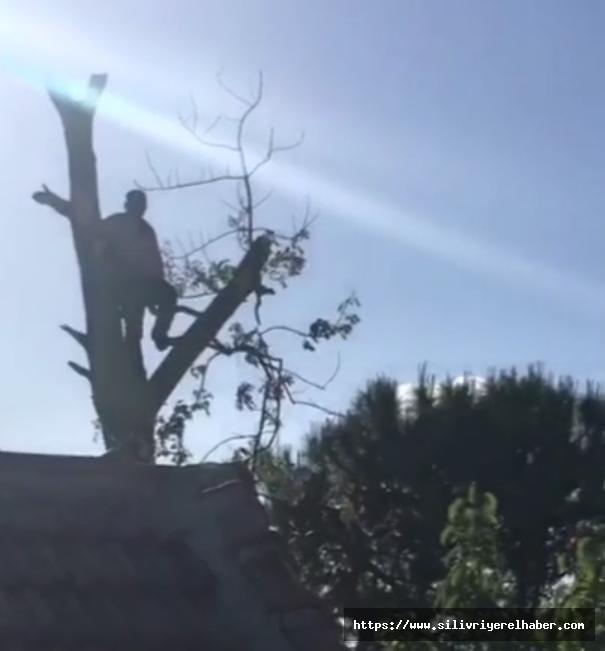 Silivri'de Budadığı Ağaçta Mahsur Kaldı