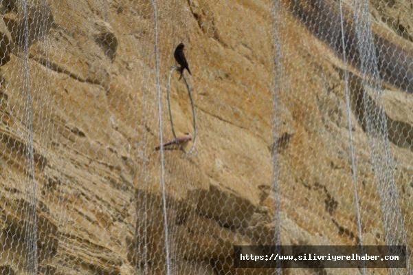 Silivri'de kuşları öldüren 'çelik ağ'