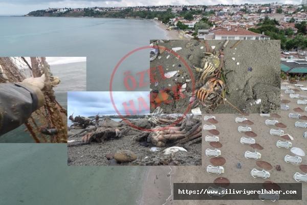 Silivri'de Onlarca Ölü Yengeç Kıyıya Vurdu