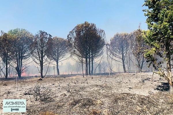 Beyciler'de Orman Fener'de Anız Yangını