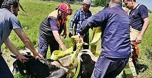 Su kuyusuna düşen ineği itfaiye kurtardı