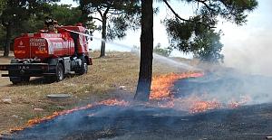 Silivri'de anız yangınları bu sefer çam ağaçlarını zarar verdi