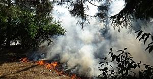 Çıkan Yangında Kaplumbağalar Kurtarıldı - Meyve ağaçları da zarar gördü