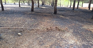 Mangal yaktılar ormanlık alanı tutuşturup kaçtılar