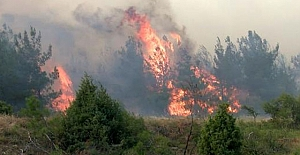 Çanakkale'de Orman Yangını 21 saattir Devam Ediyor