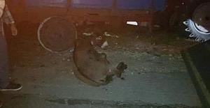 Silivri Akören#039;de eşeği metrelerce...