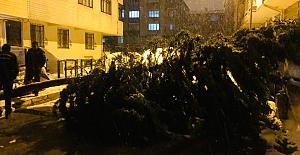 Selimpaşa#039;da ağaç yola devrildi