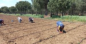 Silivri Belediyesi 50 bin Sebze Meyve Ekimi...