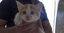 İtfaiye'den yavru kedi ve yılan kurtarma operasyonu